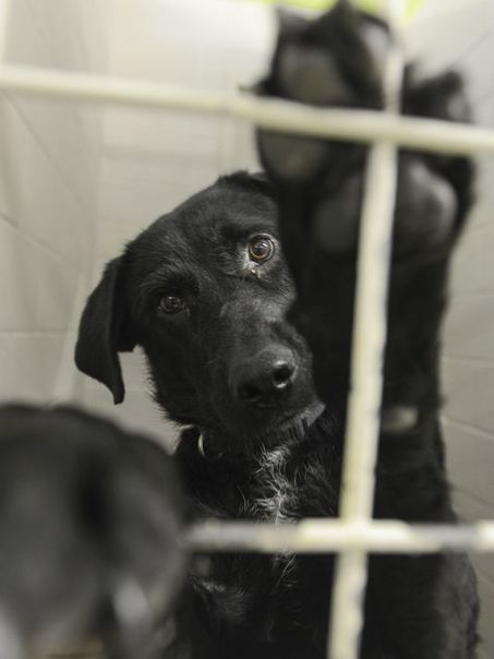 Humane Society seeks city-county partnership | Tennessee Libraries | Scoop.it