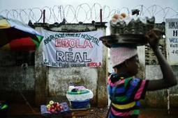 Ebola epidemic 'vastly' underestimated | WHO | 21st Century Medical English Teaching and Technology Resources | Scoop.it