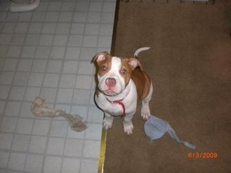 Justice for KINCAID - shot and KILLED by Baltimore Police! | Cops Shooting Dogs | Scoop.it