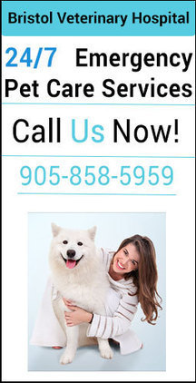 Affiliated Pet Emergency Services | 24 Hours Vet Hospital Mississauga | Vet Hospital Mississauga | Scoop.it