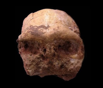 Chinese scientists find skull of Homo erectus in E China | The Archaeology News Network | Kiosque du monde : Asie | Scoop.it