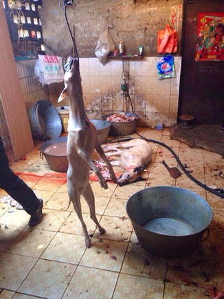 STOP Dog Meat Festival in China. Stop Killing Dog and Cat in Korea & China | Nature Animals humankind | Scoop.it