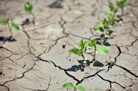 Comment les plus pauvres peuvent agir pour s'adapter contre le changement climatique | Economie Responsable et Consommation Collaborative | Scoop.it