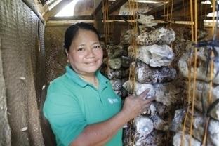 Philippines: Mushroom Cultivation Helps Communities In Bohol | Mushroom cultivation in The Third World | Scoop.it