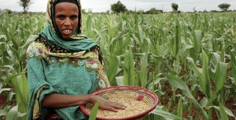 Ethiopia: The Chefe Donsa seed bank's goal for food Security | Food & Nutrition Security in East Africa | Scoop.it