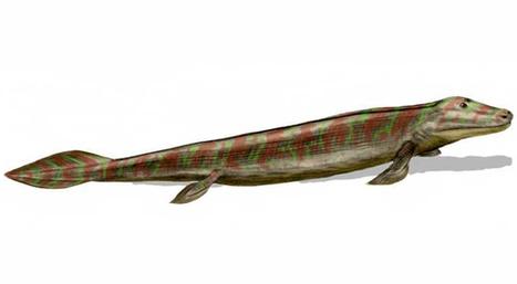 Eerste landdieren ontwikkelden hun achterpootjes in het water - Scientias.nl | KAP-VanRoyBrian | Scoop.it