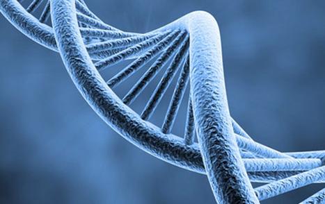 Des scientifiques ont reconstitué l'ADN d'un homme préhistorique ... - Zinfos 974   Evolution de l'Homme   Scoop.it