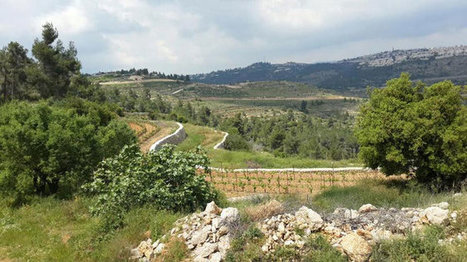 The Vineyard on the Israeli-Palestinian Border | Vitabella Wine Daily Gossip | Scoop.it