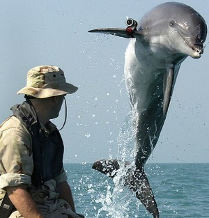Navy to stop training military dolphins in San Diego - North County Times (blog) | ScubaObsessed | Scoop.it