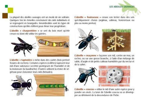 Les abeilles sauvages et domestiques : un excellent livret à télécharger | Mes passions natures | Scoop.it