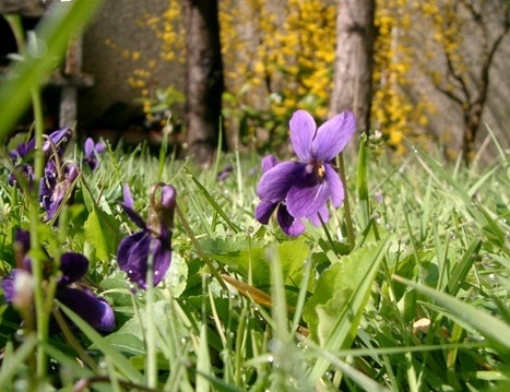 Les Araignées du jardin | Les colocs du jardin | Scoop.it