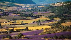Agroécologie : la solution pour une agriculture verte ? | Questions de développement ... | Scoop.it