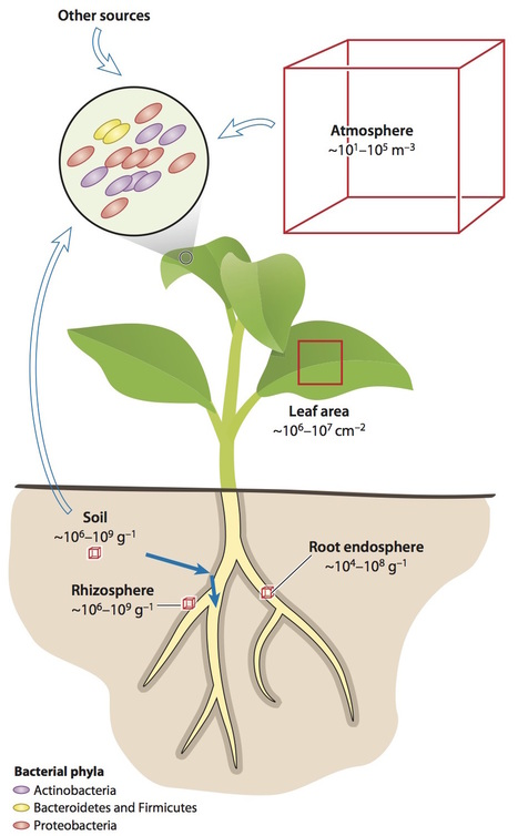 Annual Review of Plant Biology:Structure and Functions of the Bacterial Microbiota of Plants (2013) | Plants and Microbes | Scoop.it