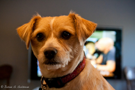 Does Your Dog Love You Back? | The Thoughtful Animal, Scientific American Blog Network | world news | Scoop.it