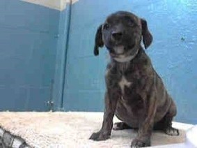 Committed adopter fails to show, putting adorable puppy in grave danger | Nature Animals humankind | Scoop.it
