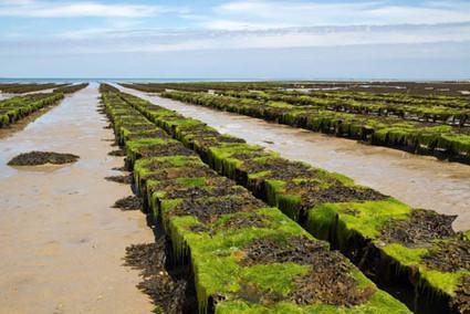 Las algas como fertilizantes en la agricultura | Agricultura | Scoop.it