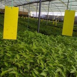Lijmvangplaten - set van 10 stuks   Planten en eten   Scoop.it