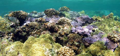 Can a coral reef recover from bleaching and other stressful events? | Biodiversity protection | Scoop.it