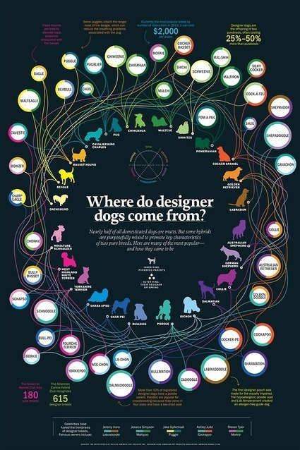 WTF Visualizations | A world of Data (science, small, big, social, open, viz ...) | Scoop.it