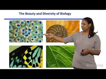 Video: Introduction to Synthetic Biology and Metabolic Engineering | SynBioFromLeukipposInstitute | Scoop.it