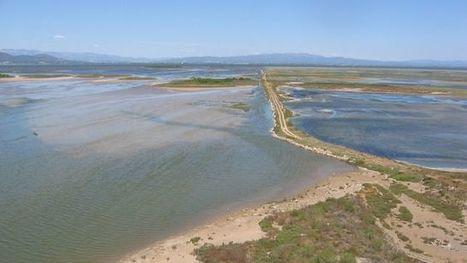 El declive del delta del Ebro pone en riesgo 400 millones invertidos en proyectos de protección | #territori | Scoop.it