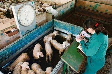 Quels nouveaux visages pour les Chambres d'agriculture ? | Agriculture en Dordogne | Scoop.it
