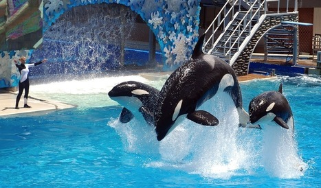Did SeaWorld Kill a Forbes Story on the Blackfish Effect?   Digital-News on Scoop.it today   Scoop.it