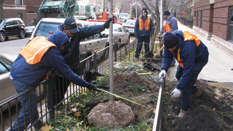 Mayor Lauds City's Gains Over Tree-Trimming Backlog | Tree News | Scoop.it