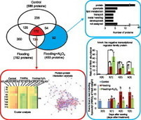 Proteomic analysis of flooded soybean root exposed to aluminum oxide nanoparticles | Plant Genomics | Scoop.it