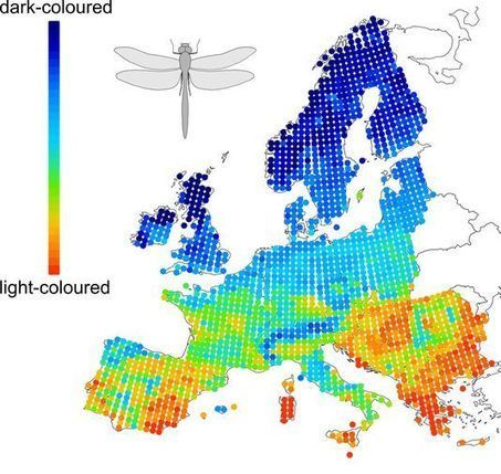 Papillons et libellules perdent leurs couleurs avec le réchauffement climatique | EntomoNews | Scoop.it