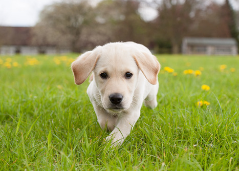 Pets Are Victims Of Domestic Abuse Too, Says Herts Charity - Mix 96 | domestic violence and pets | Scoop.it