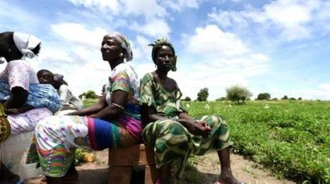 Au #Sénégal, des agriculteurs s'adaptent face au changement climatique | décroissance | Scoop.it
