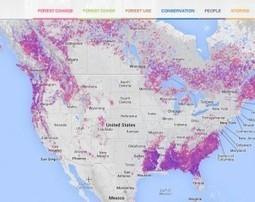 Google launches deforestation watch website   Tudo o resto   Scoop.it
