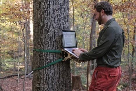 Un bureau en pleine forêt | Le Troisième Oeuvre | Environnement de Travail | Scoop.it