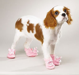 Dog Can't Walk in Shoes | Animal Lover! | Scoop.it