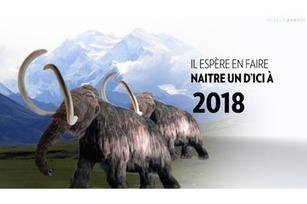 En 2018 - La renaissance du mammouth | Histoire, Géographie, International, Société, Economie | Scoop.it