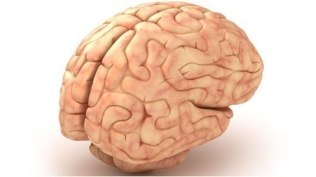 Polymer implants could help heal brain injuries   Cerebral Palsy   Scoop.it