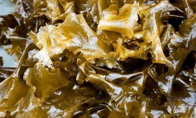 Seaweed biofuels: a green alternative that might just save the planet | BIOSCIENCE NEWS | Scoop.it