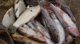 Bas-Congo : une usine de séchage de poisson bientôt implantée à Lenvu | Radio Okapi | Agriculture en RDC - République Démocratique du Congo | Scoop.it