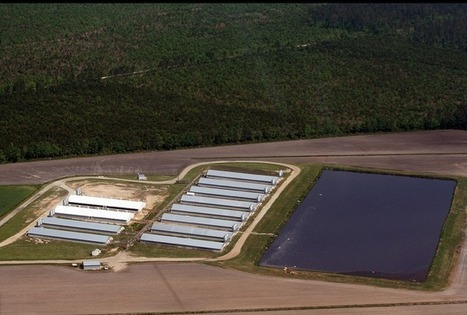 NC hog farm threatened with citizen lawsuit over water pollution | North Carolina Agriculture | Scoop.it