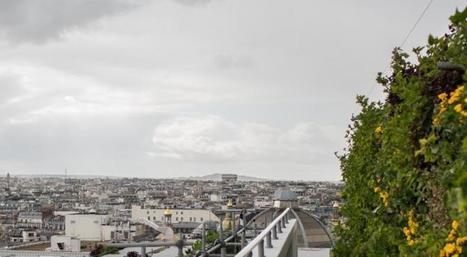 Paris-culteurs, le projet pour une agriculture urbaine en capitale | Alim'agri | Agriculture urbaine et rooftop | Scoop.it
