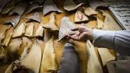 MP's animal welfare bill the latest attempt to ban import of shark fin | Farming, Forests, Water, Fishing and Environment | Scoop.it
