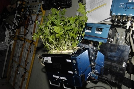 Astronauts hope to grow lettuce on the moon in 2015 | botany | Scoop.it