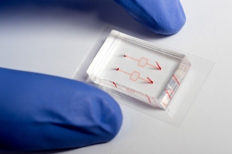 Microfluidic Chip Mimics Smallest Capillaries to Study How Drugs Affect the Mechanics of Cells | | Shaping the Future of Medical Technology | Scoop.it