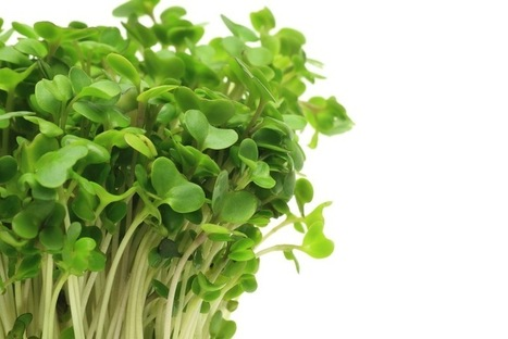 Broccoli Brew Eases Air Pollution Effect, But Is This Detox? | Erba Volant - Applied Plant Science | Scoop.it