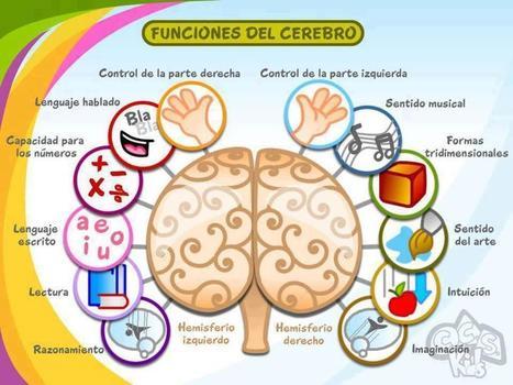 Una sencilla manera de aprender cómo funciona cada hemisferio cerebral | Educacion, ecologia y TIC | Scoop.it