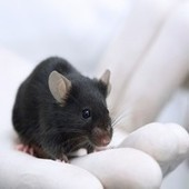 I am a little mouse and I want to live longer! | Tomorrow's WORLD | Scoop.it