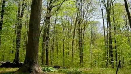 Watch how a forest changes over a year   Earth Sciences and Geography   Scoop.it
