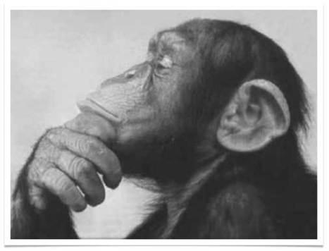 El Mono Sapiens | Creativity | Scoop.it