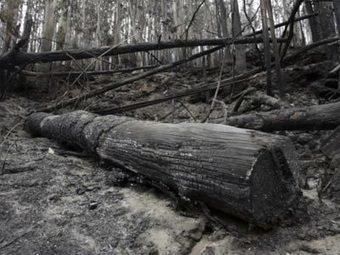 El 91% de los incendios forestales de la última década quedaron impunes | TIC TAC PATXIGU NEWS | Scoop.it